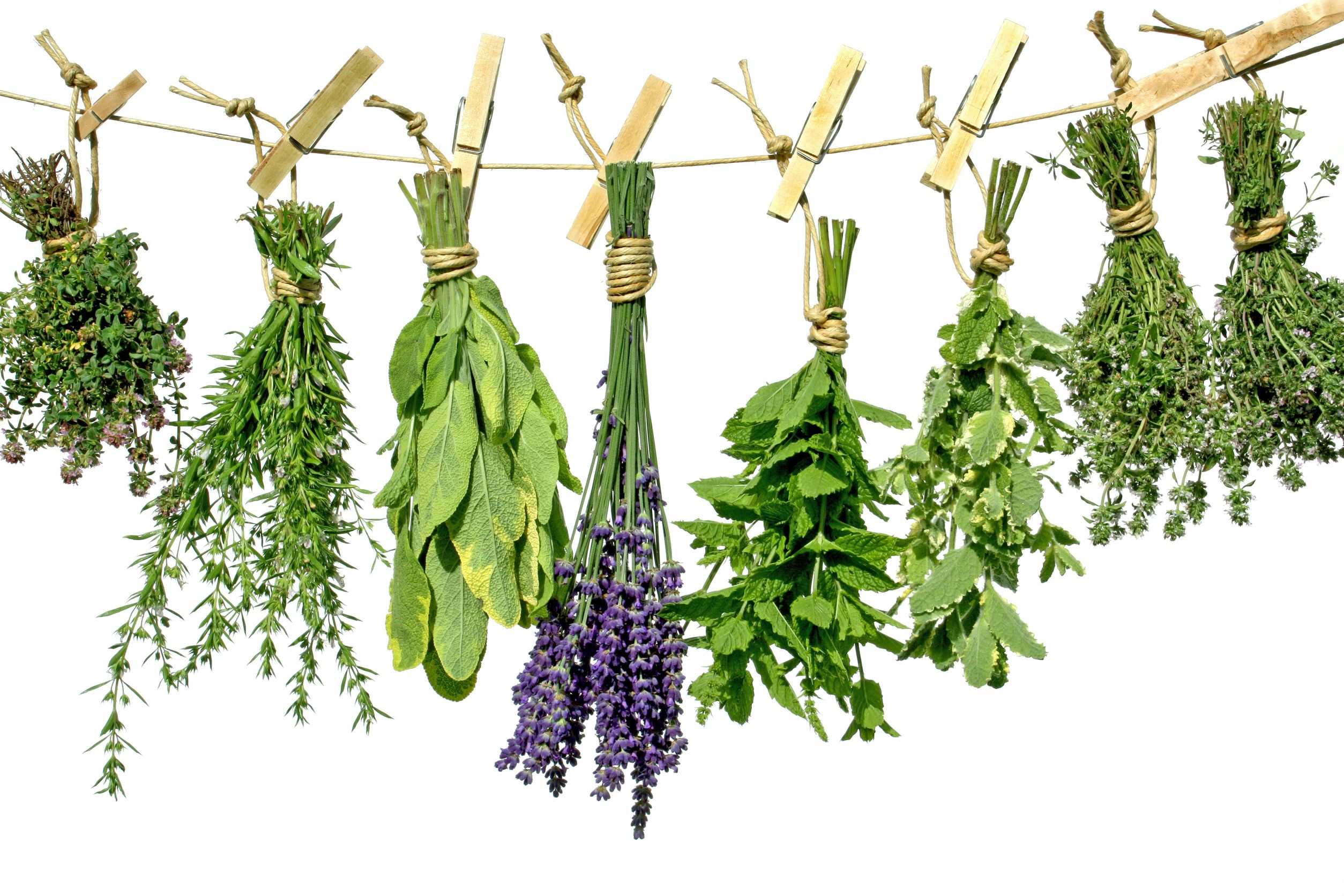 Porcované bylinky jednodruhové