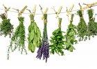 Sypané bylinky jednodruhové