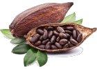 Kakao, karob