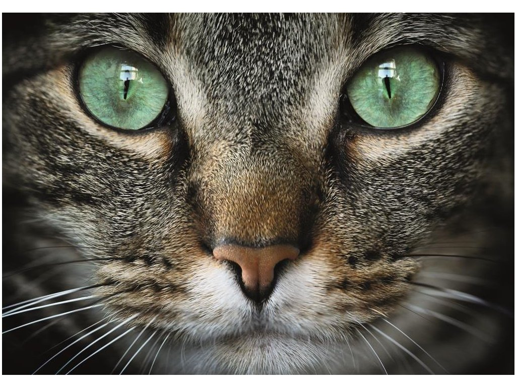 DINO Puzzle Zelenooká kočka XL 300 dílků