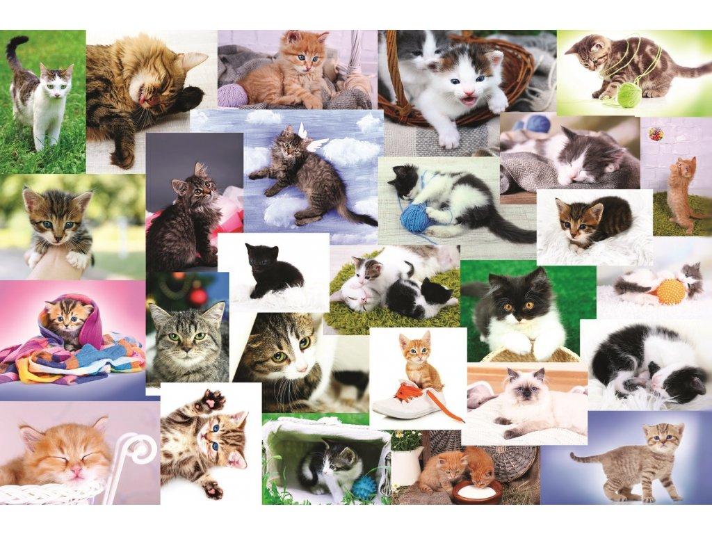 TREFL Puzzle Kočičí svět 60 dílků