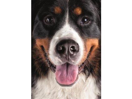 DINO Puzzle Chlupatý pes XL 300 dílků