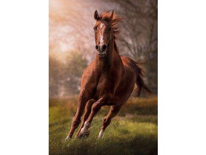 CLEMENTONI Puzzle Kůň 1500 dílků