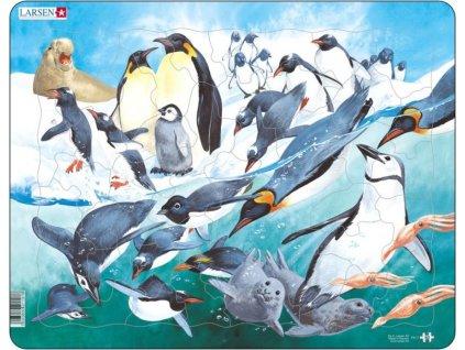 LARSEN Puzzle Tučňáci 50 dílků