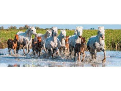 DINO Panoramatické puzzle Camargští koně 150 dílků
