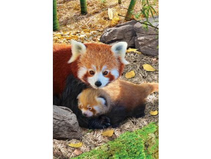 EUROGRAPHICS Puzzle Pandy červené XL 250 dílků
