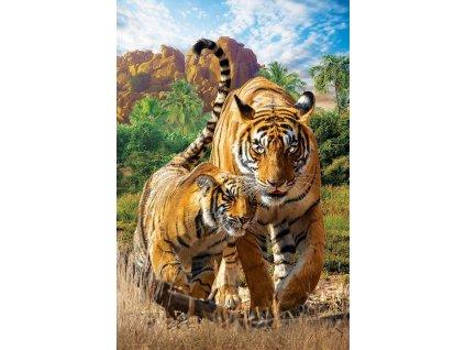 EUROGRAPHICS Puzzle Tygři XL 250 dílků
