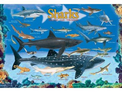 EUROGRAPHICS Puzzle Žraloci 100 dílků