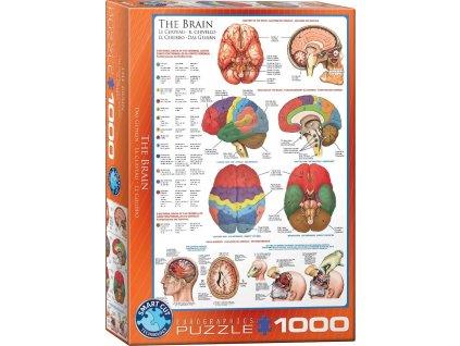 EUROGRAPHICS Puzzle Mozek 1000 dílků