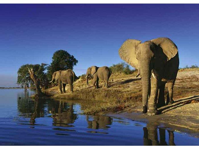 Alexander von Humboldt - Žízníví sloni (Thirsty Elephants)
