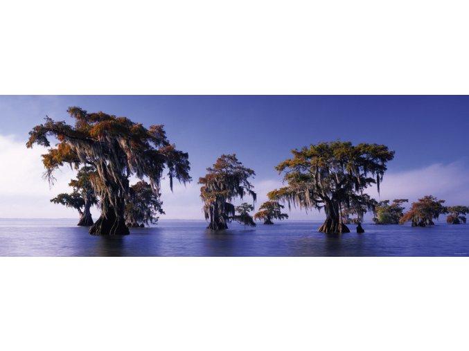 Alexander von Humboldt - Suché cypřiše (Bald Cypresses) - panorama