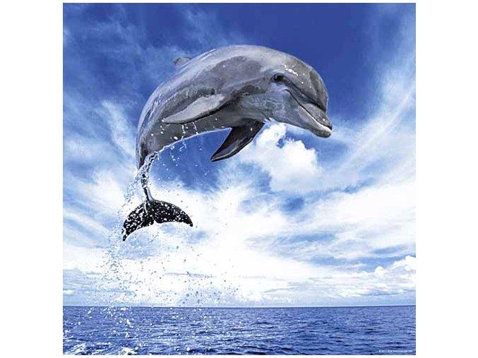 Andy Rouse: Skákající delfín (Dolphin) - čtvercové