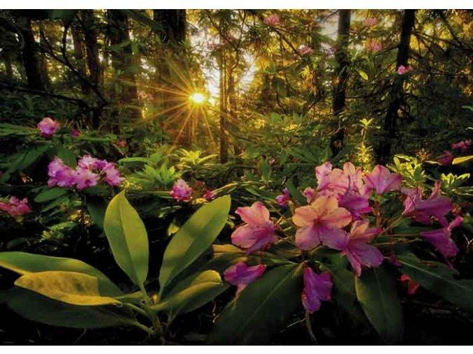Magic Forests: Rhododendron