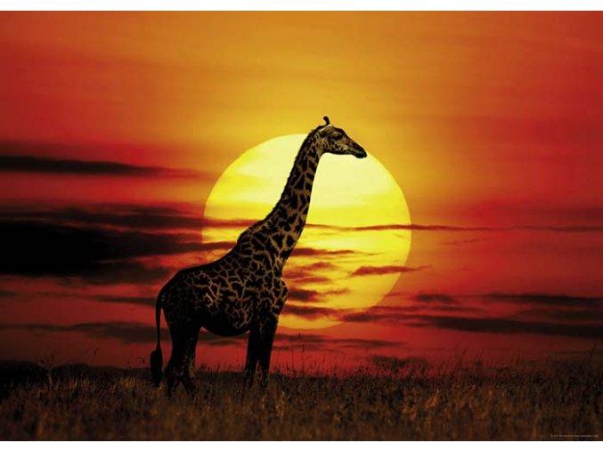 Alex Bernasconi: Žirafa a západ Slunce - Sunlight