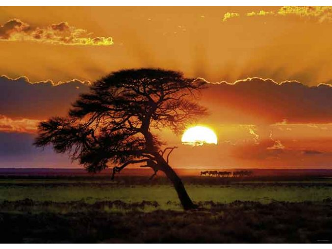 Norbert Becke: Strom a západ Slunce - Sunlight