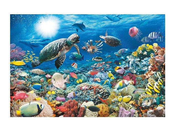 Mořský život