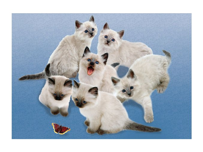 My Puppies - Koťata s motýlem - HQC