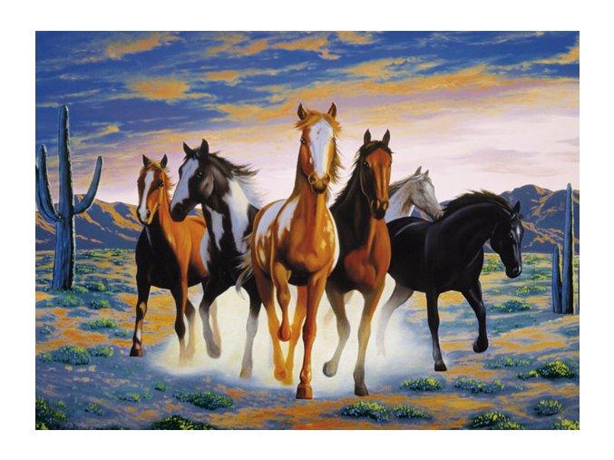 Koně na poušti - HQC
