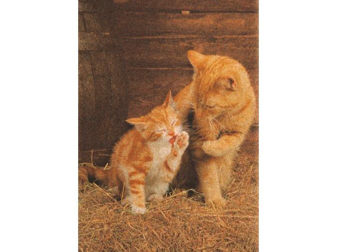 Ginger cats  - korkové puzzle
