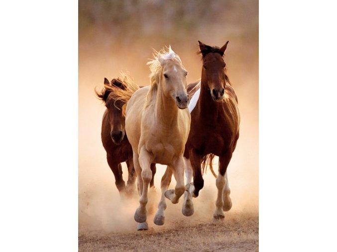 Běžící koně - HQC