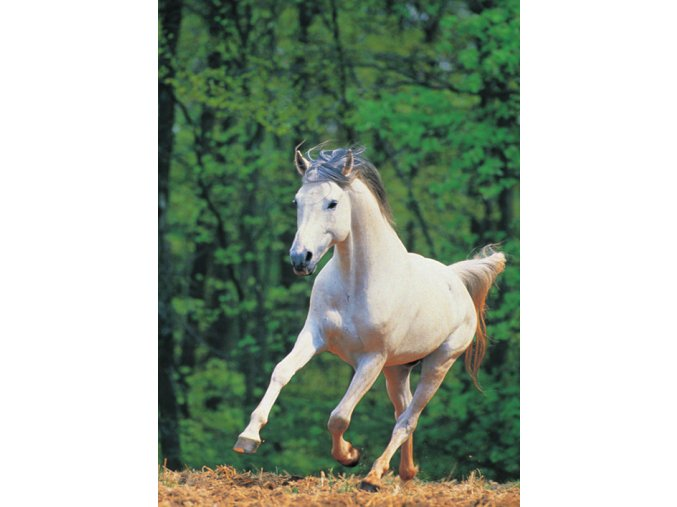 Bílý kůň - Party puzzle