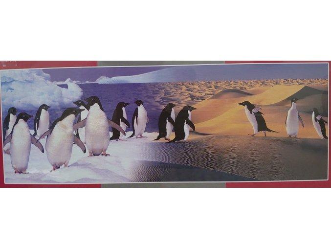 Tučňáci - panorama
