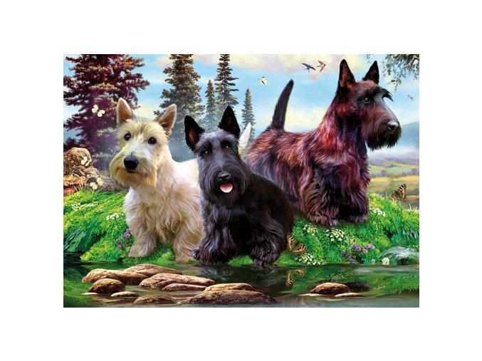 Partička psů