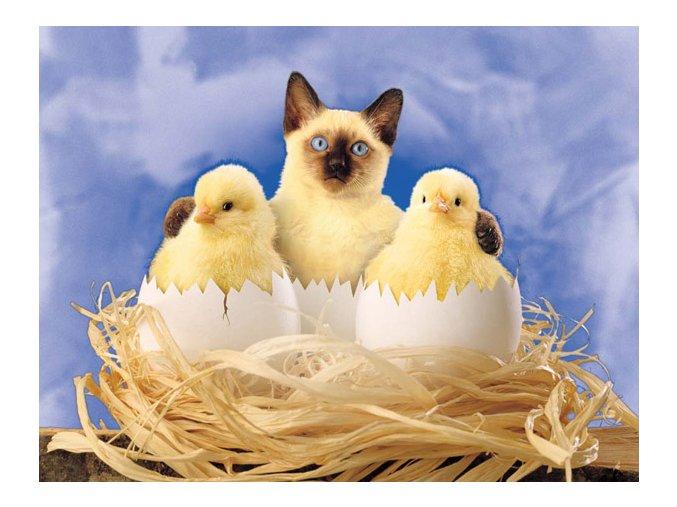 Kamarádi - kočička s kuřátky