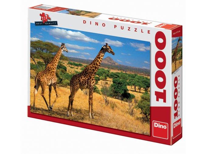 Dvě žirafy