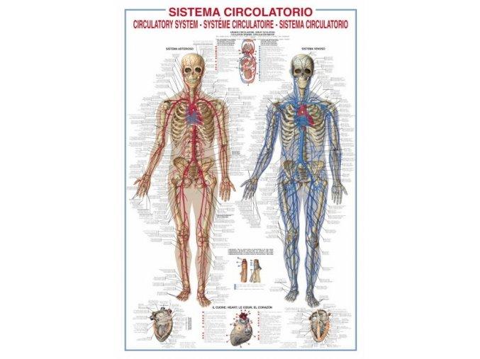 Circulatory system - popisky v angličtině a italštině