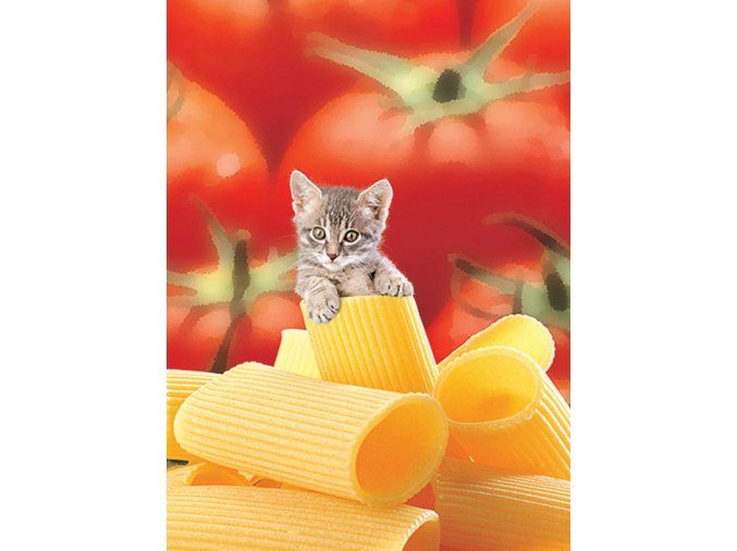 Kotě v makaronech - HQC