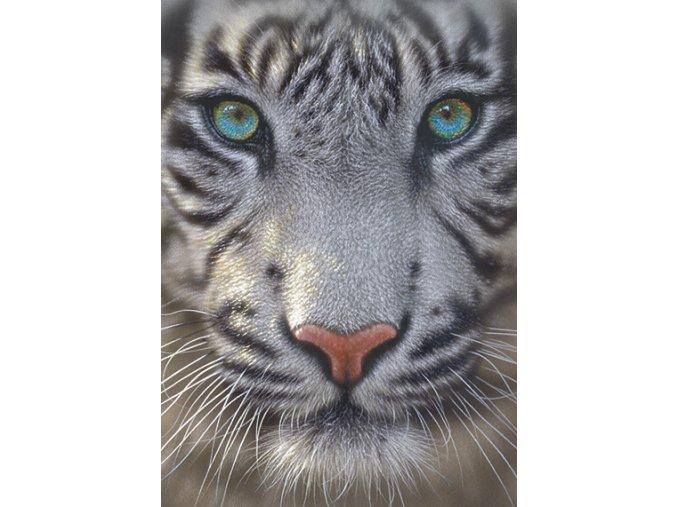 Bílý tygr - portrét