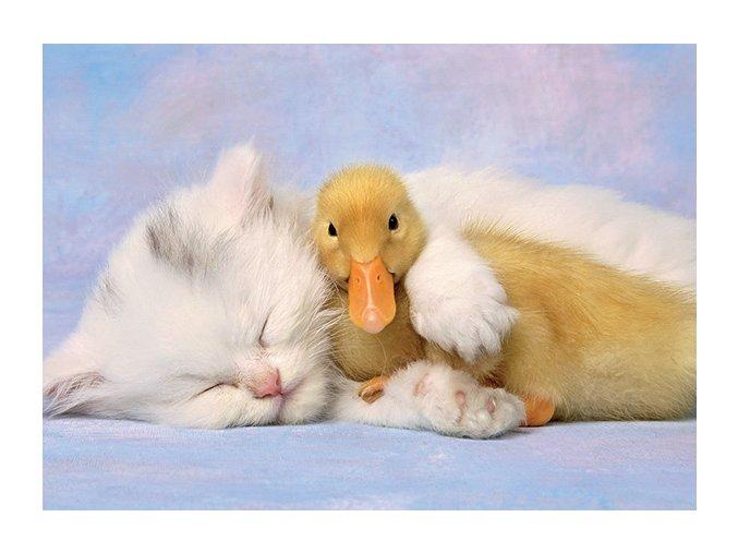 Můj nejlepší přítel (Kotě a kačátko)