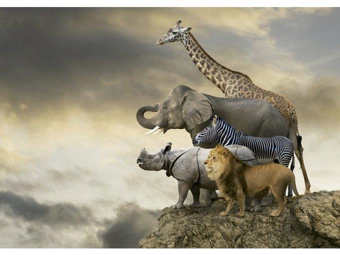 Zvířata nad propasí