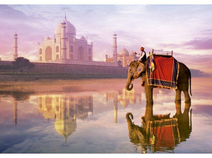 Slon u Taj Mahal