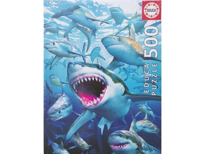 Žraločí klub