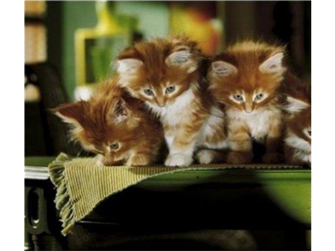 Koťata - Whiskas