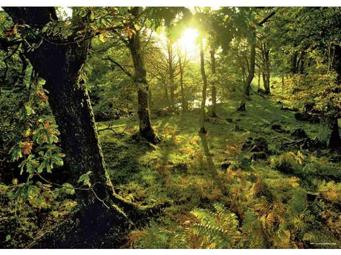 Magický les - Mýtina (Magic Forest - Glade)