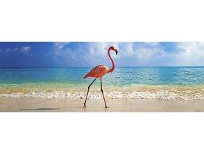 Plameňák (Flamingo) - panorama