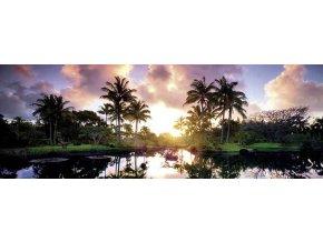 Alexander von Humboldt: Palmy (Palm Trees) - panorama