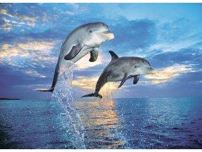 Skákající delfíni - HQC - foto