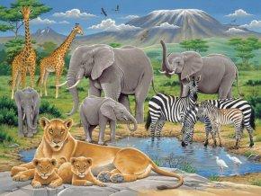 Zvířata v Africe - XXL