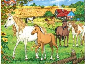 Koníci - deskové