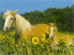 Koně na louce - XXL