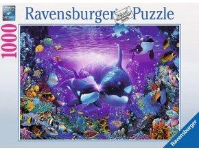 Kosatky - Romantika pod vodou (Brilliant Passage)
