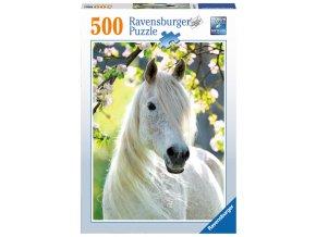 Bílý jezdecký kůň