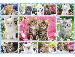 Koťata (Kittens)