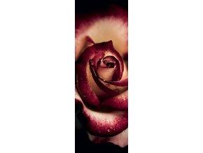 Alan Shapiro: Vzácná růže (Precious  Rose) - vertikální