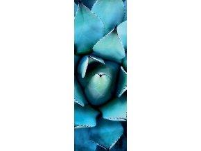Alan Shapiro: Modrá echeveria (Blue Echeveria) - vertikální