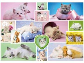 Mazlivé kočičky